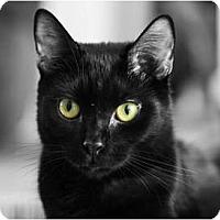 Adopt A Pet :: Hoku - Carlisle, PA