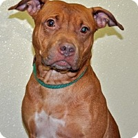 Adopt A Pet :: Jada - Port Washington, NY