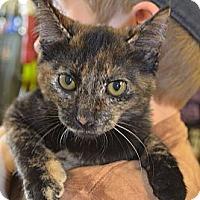 Adopt A Pet :: Ileana - Houston, TX