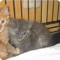 Adopt A Pet :: Lacy&Kitten's - Clay, NY