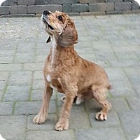 Adopt A Pet :: Chance - Salem, OR