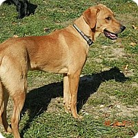 Adopt A Pet :: Magic - Denver, CO