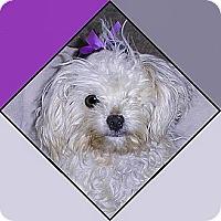 Adopt A Pet :: Miss Minnie - Cotati, CA