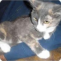 Adopt A Pet :: Gracie - Davis, CA