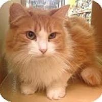 Adopt A Pet :: Wholly - Modesto, CA