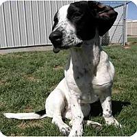 Adopt A Pet :: Brenna - Meridian, ID