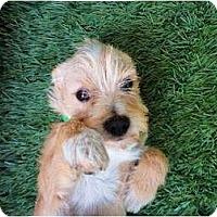 Adopt A Pet :: Jasper - Mission Viejo, CA
