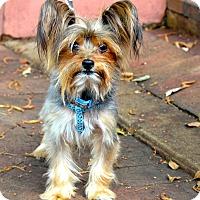 Adopt A Pet :: Bailey - Miami, FL