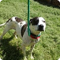 Pit Bull Terrier Mix Dog for adoption in Columbia, South Carolina - Athena