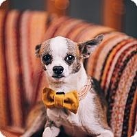 Adopt A Pet :: Eddy - Portland, OR