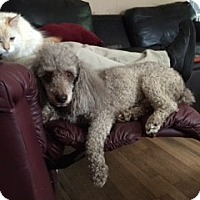 Adopt A Pet :: Willie - Richmond, VA