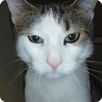 Adopt A Pet :: Nadia - Hamburg, NY