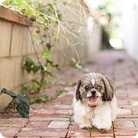 Adopt A Pet :: Monsieur Pepe - Los Angeles, CA