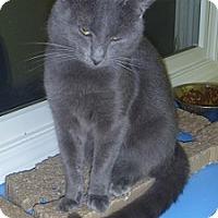 Adopt A Pet :: Dorringo - Hamburg, NY