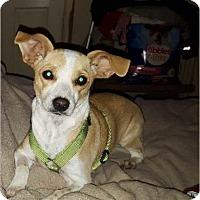 Adopt A Pet :: Kiwi - Andalusia, PA