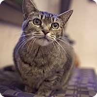 Adopt A Pet :: Pretty Kitty - Sterling, KS
