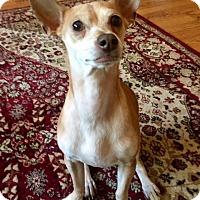 Adopt A Pet :: Gimli - Aurora, IL