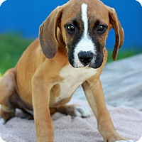 Adopt A Pet :: Reed - Waldorf, MD