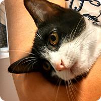 Adopt A Pet :: Lusion - Scottsdale, AZ