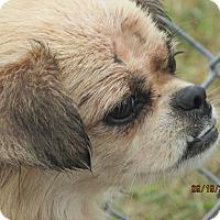 Adopt A Pet :: Carlie - Germantown, MD