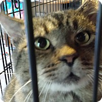 Adopt A Pet :: Elby (Big Boy) - Jeannette, PA