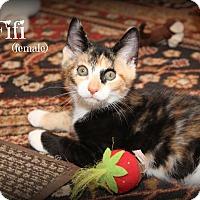 Adopt A Pet :: Fifi - Glen Mills, PA