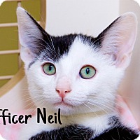 Adopt A Pet :: Officer Neil - Livonia, MI