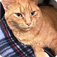 Adopt A Pet :: Pumpkin - Kalamazoo, MI