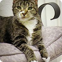 Adopt A Pet :: Octavia - Casa Grande, AZ