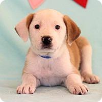 Adopt A Pet :: Urtiz - Waldorf, MD