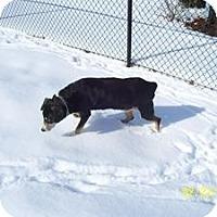 Adopt A Pet :: Jezebel - Wilmington, MA