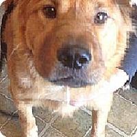 Adopt A Pet :: Frisky - ....., FL