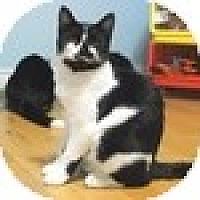 Adopt A Pet :: Ajax - Vancouver, BC