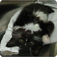 Adopt A Pet :: Star - Mission, BC