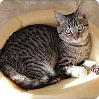 Adopt A Pet :: Duggles - Duncan, BC