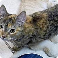 Adopt A Pet :: Belen - Byron Center, MI