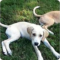 Adopt A Pet :: Liam - Adamsville, TN