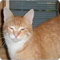 Adopt A Pet :: Pita - Lombard, IL