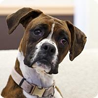 Adopt A Pet :: Mimi - Ile-Perrot, QC