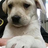 Adopt A Pet :: Octavia - Gainesville, FL