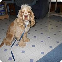 Adopt A Pet :: Sandi  -Adopted! - Kannapolis, NC
