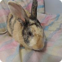 Adopt A Pet :: Felicity - Hillside, NJ