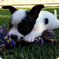 Adopt A Pet :: Dip - Santa Rosa, CA