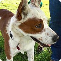 Adopt A Pet :: Harry - Boulder, CO