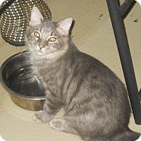 Adopt A Pet :: Greyson - Harrisburg, NC