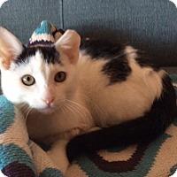 Adopt A Pet :: Hiram - Brooklyn, NY