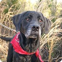 Adopt A Pet :: Joey - Westport, CT