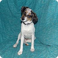 Adopt A Pet :: Ophelia Girl - New Oxford, PA