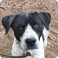 Adopt A Pet :: Wishbone - Harrisonburg, VA