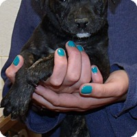 Adopt A Pet :: STELLA - Corona, CA